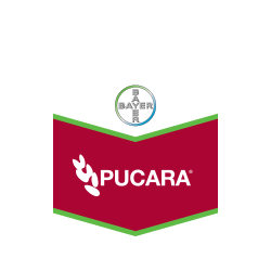 PUCARA FS400